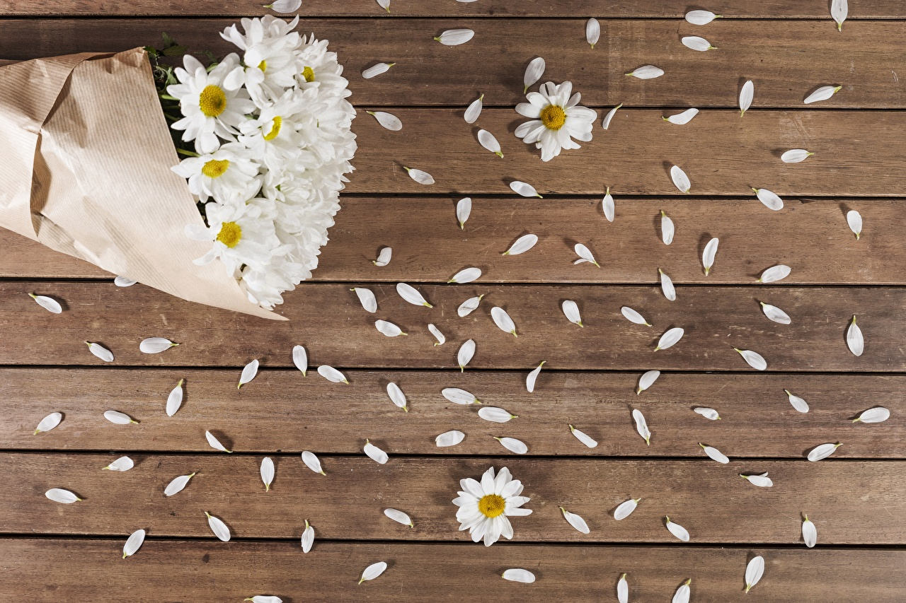 Desktop Wallpapers Petals flower matricaria Wood planks Flowers Camomiles boards