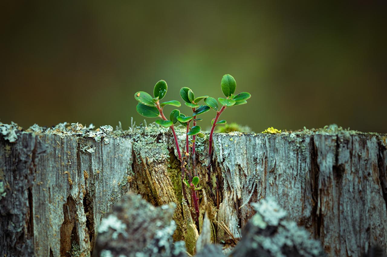Desktop Wallpapers Leaf Nature Tree stump Branches Closeup Foliage
