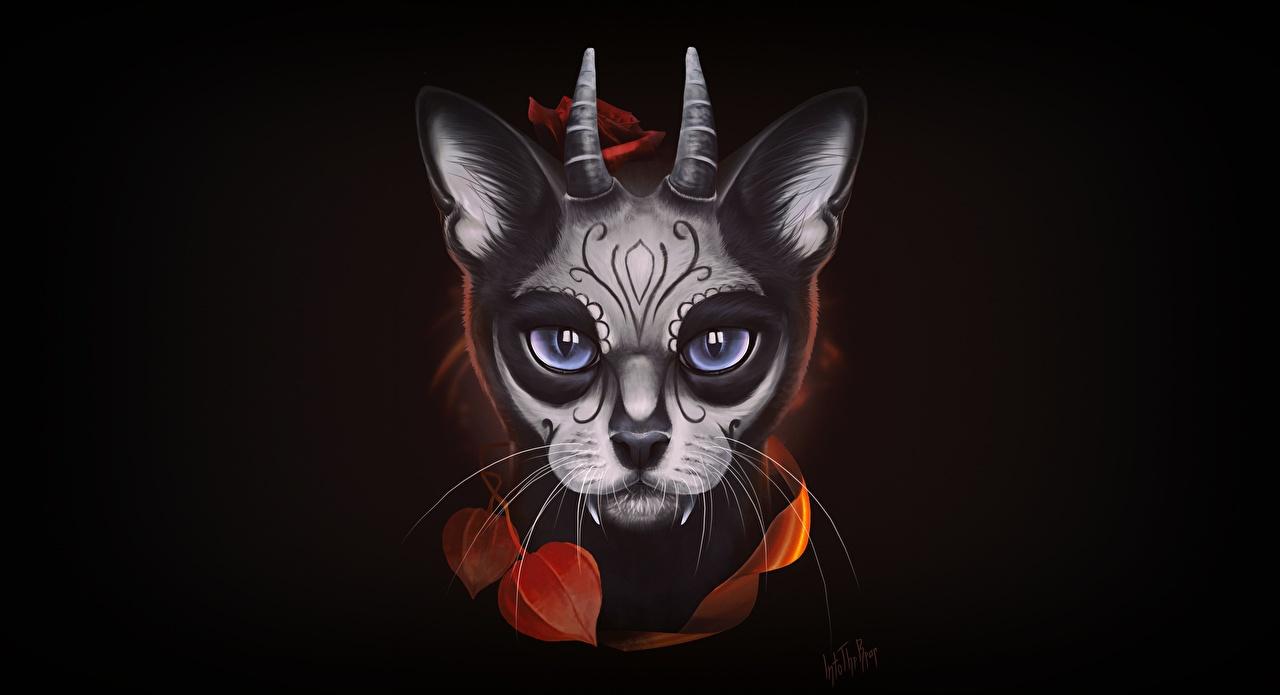 Image cat Horns Santa Muerte, Into The Bear animal Staring Black background Cats Glance Animals