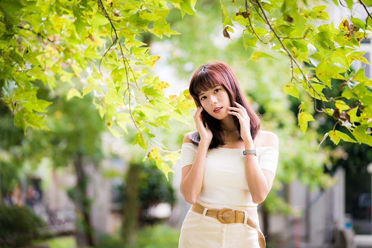 Foto In posa Ragazze asiatico di ramo Le mani Sguardo ragazza giovane donna giovani donne Asiatici Rami Braccia Colpo d'occhio