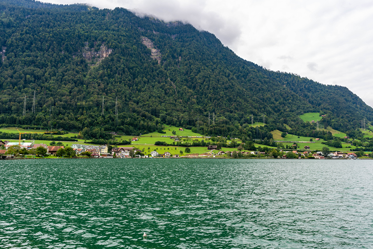 Photo Switzerland Village village Arth, Lake Zug Nature mountain Forests Houses Mountains forest Building