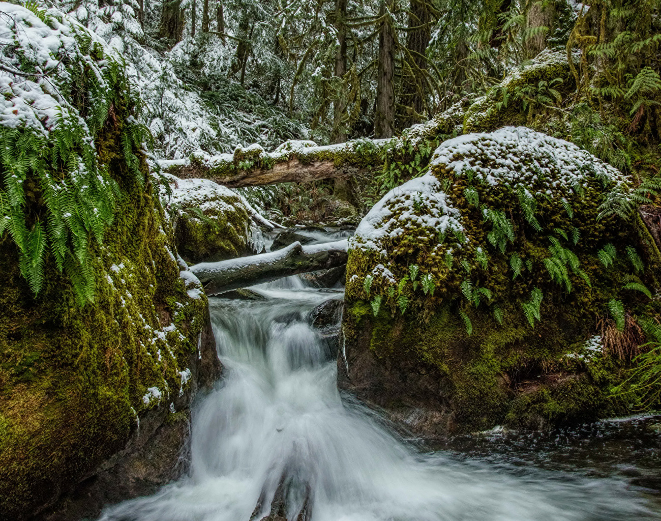 Picture Canada Vancouver Island Parks Nature Stream Waterfalls Snow Moss