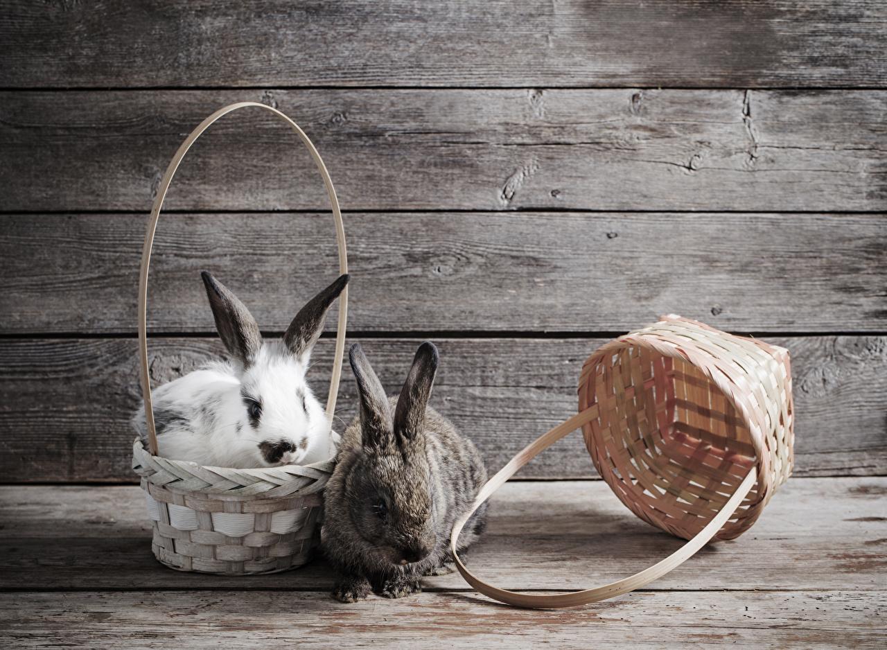 Bilder Kaninchen Zwei Weidenkorb Mauer Tiere Bretter 2