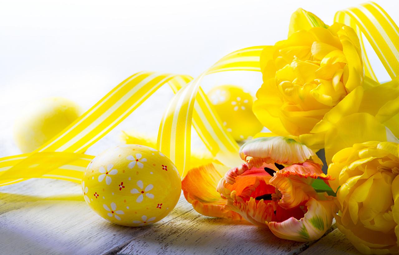 Image Easter Eggs tulip Flowers Food Ribbon egg Tulips flower