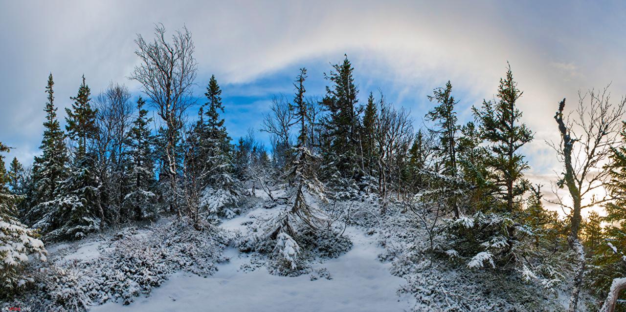 Photo Norway Winter Nature Snow Trees