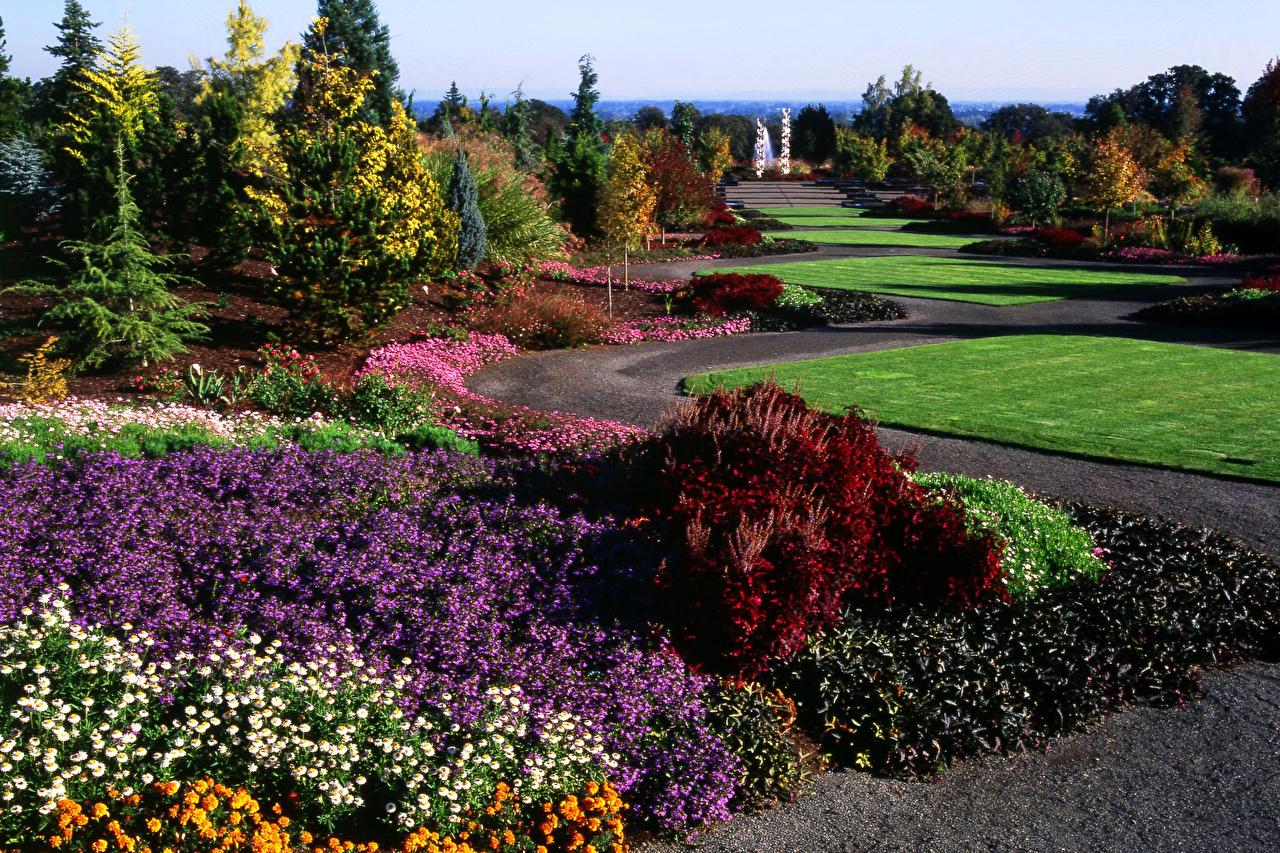 Bilde USA Oregon Garden Natur Hage Bellis Tagetes Plen Busker amerika Ferdigplen
