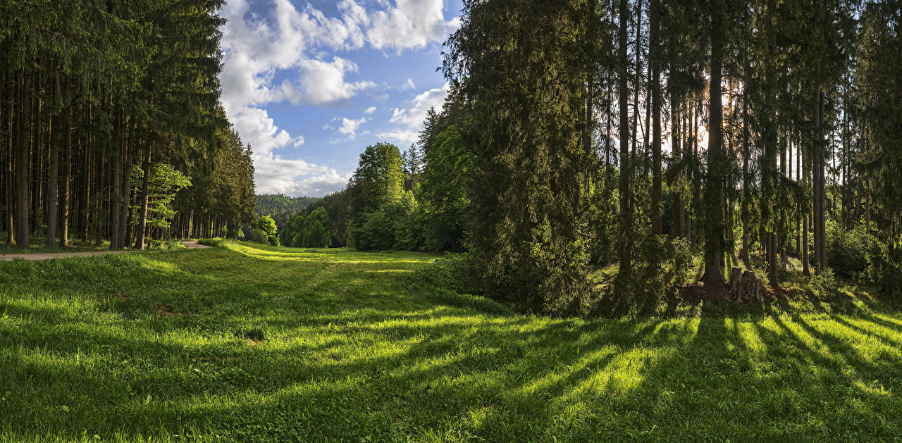 Wallpaper Germany Naturpark Augsburg Nature Parks Forests Grass Trees park forest