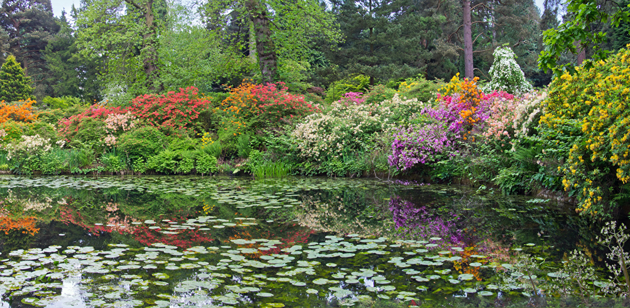Wallpaper Nature Pond Parks Rhododendron Shrubs Bush