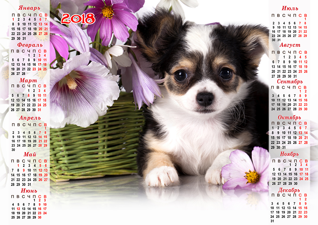 Images 2018 Puppy Chihuahua dog New year Calendar Animals