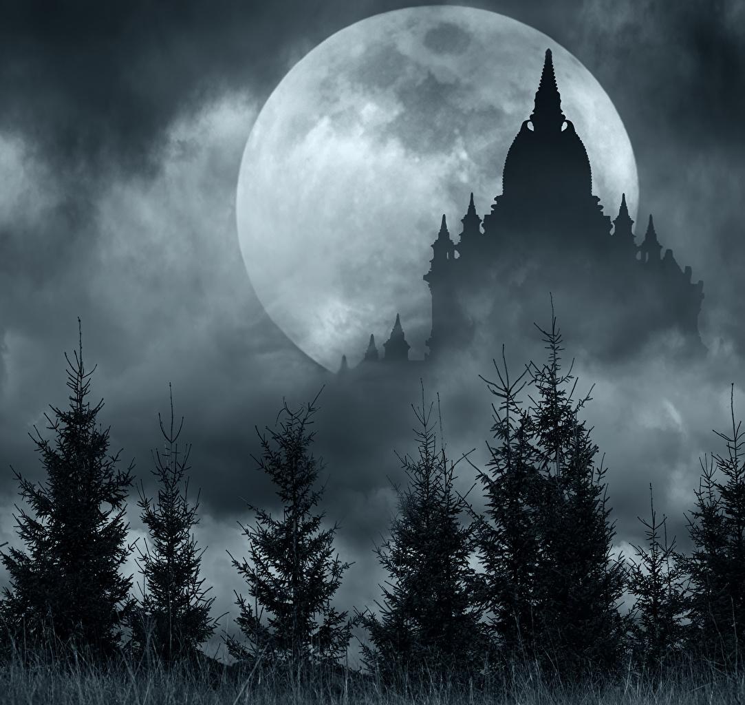 Desktop Hintergrundbilder Silhouetten Natur Fichten Mond Nacht Tempel Silhouette