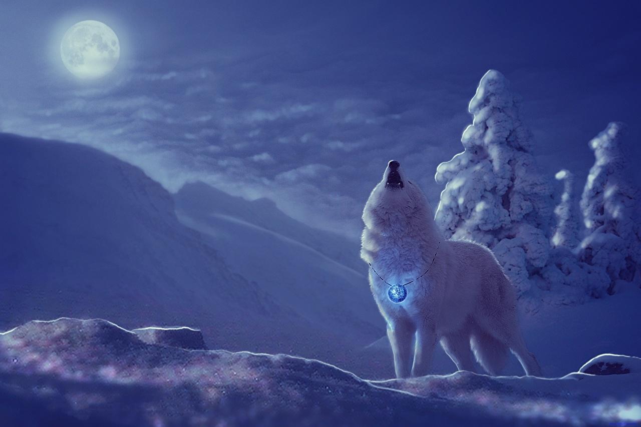 壁紙 オオカミ 描かれた壁紙 冬 ファンタジー動物 雪 夜 月