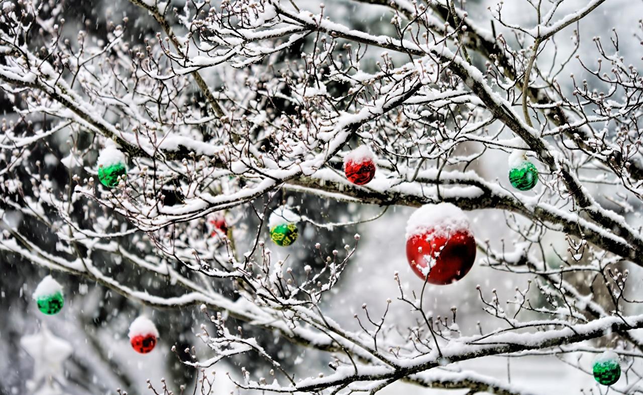 Fotos Neujahr Schnee Ast Kugeln