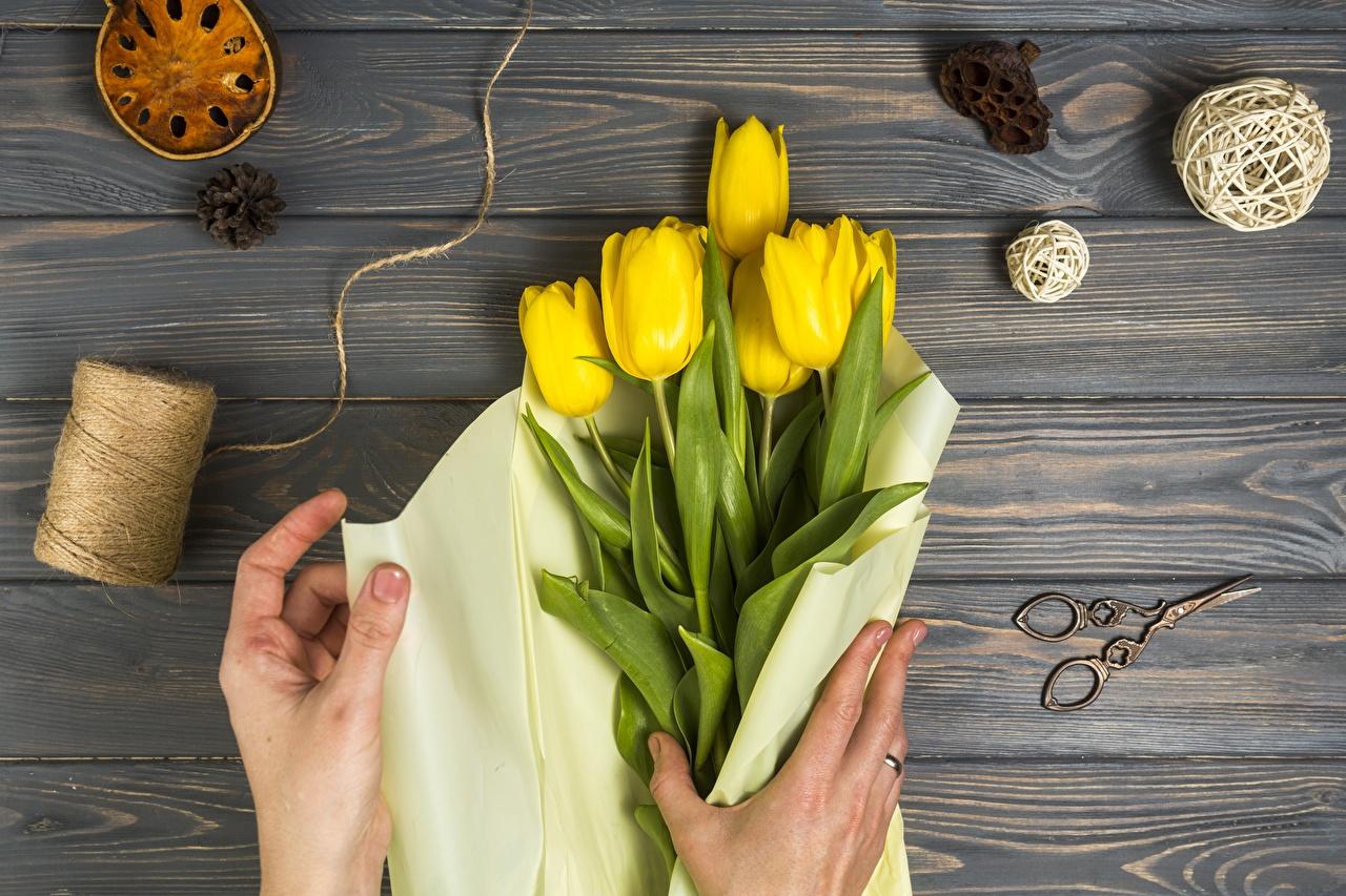 Hintergrundbilder Gelb Tulpen Blüte Hand Bretter Blumen
