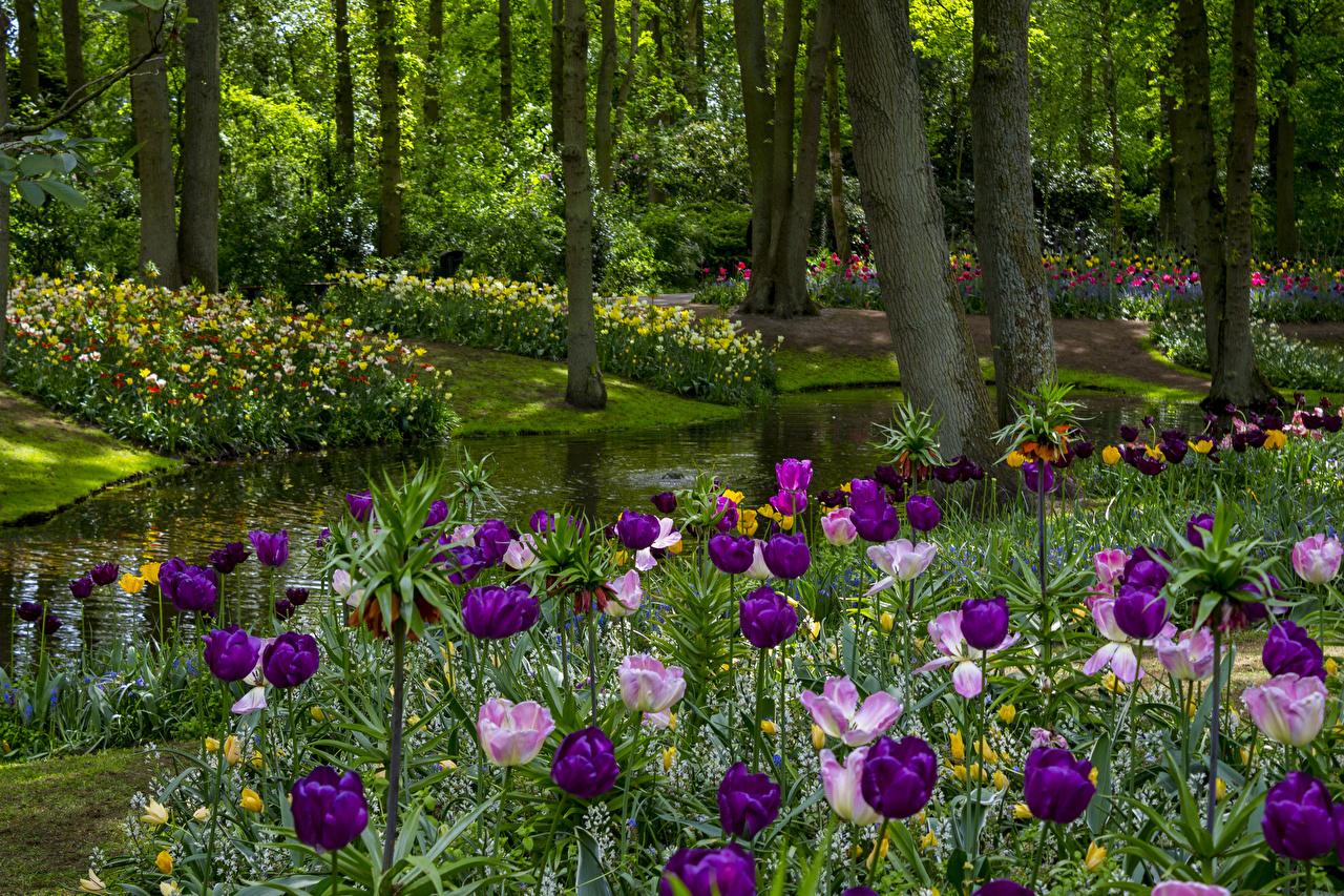 壁紙 オランダ 公園 春 池 チューリップ Keukenhof Gardens 木
