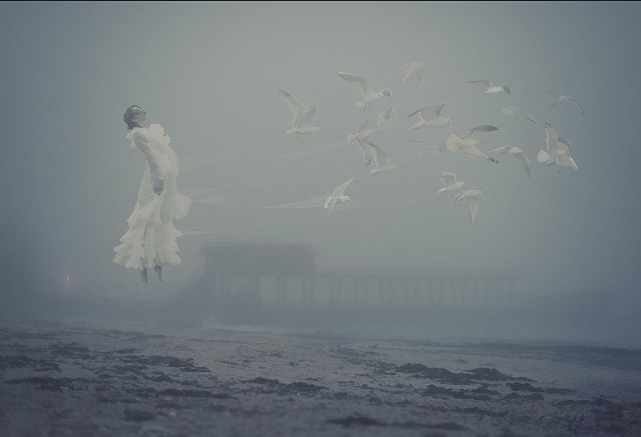 Wallpaper bird seagulls Fog Sea Girls Coast Gull Birds female young woman