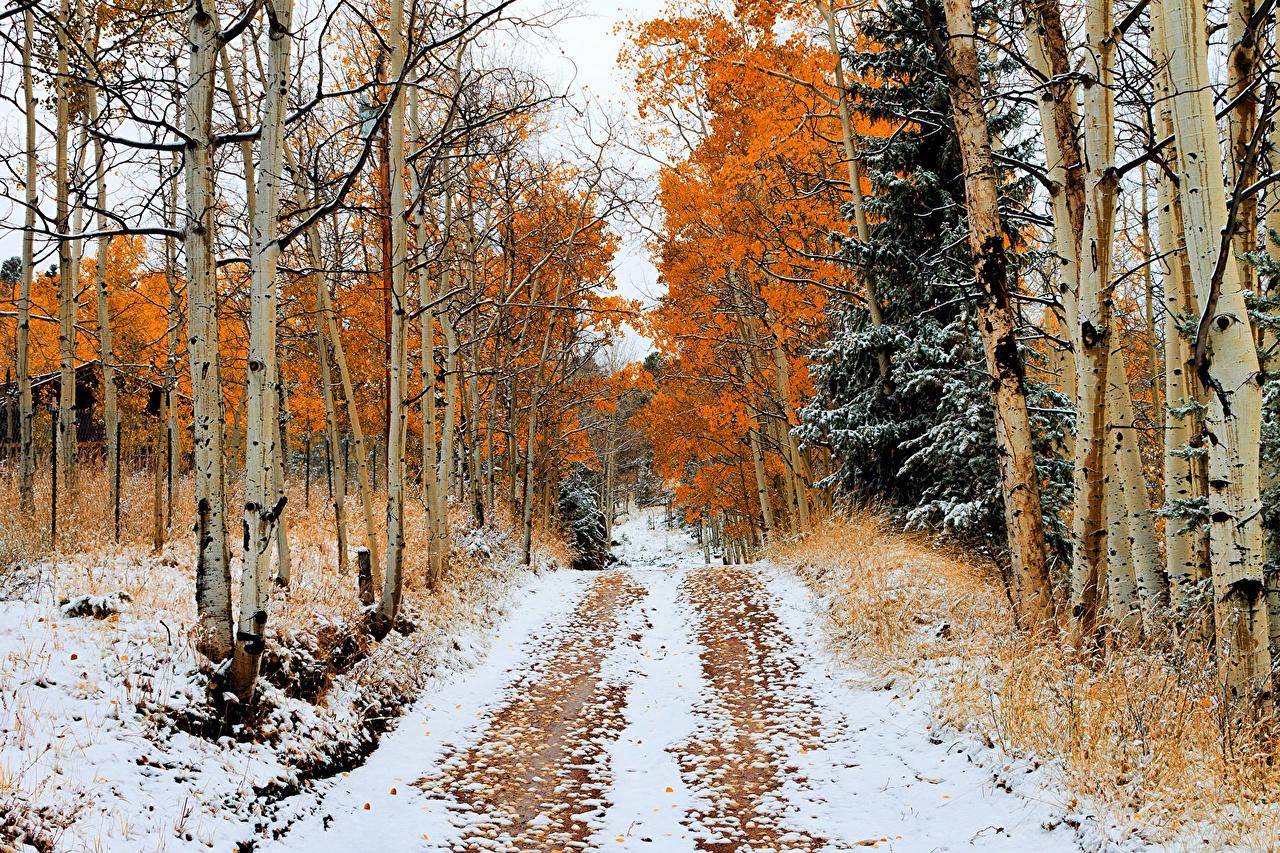 Desktop Wallpapers Birch Winter Nature Snow Roads Forests Seasons forest