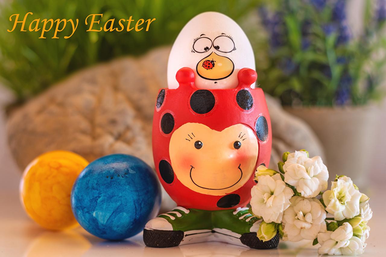 Bilde Påske engelske egg blomst Eustoma Kreativa Skrevet ord Mat Engelsk Egg tekst kreativ Blomster originale