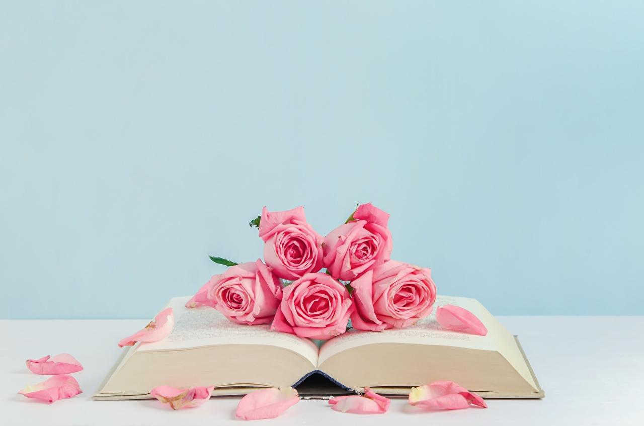 Bilder von Rose Rosa Farbe Blüte Bücher Rosen Blumen Buch