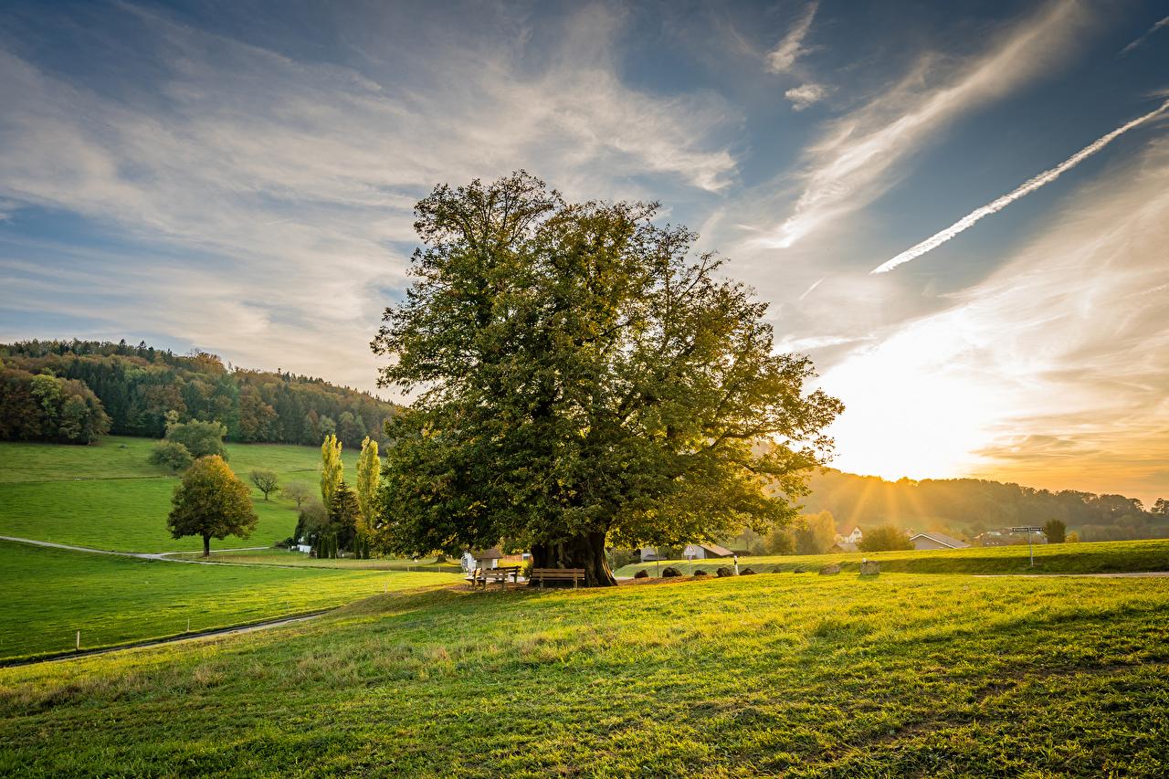 壁紙 スイス 朝焼けと日没 草原 Linner Linde 木 自然