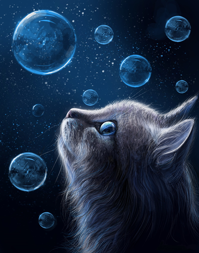 Pictures Cats Soap bubbles Head Animals Painting Art