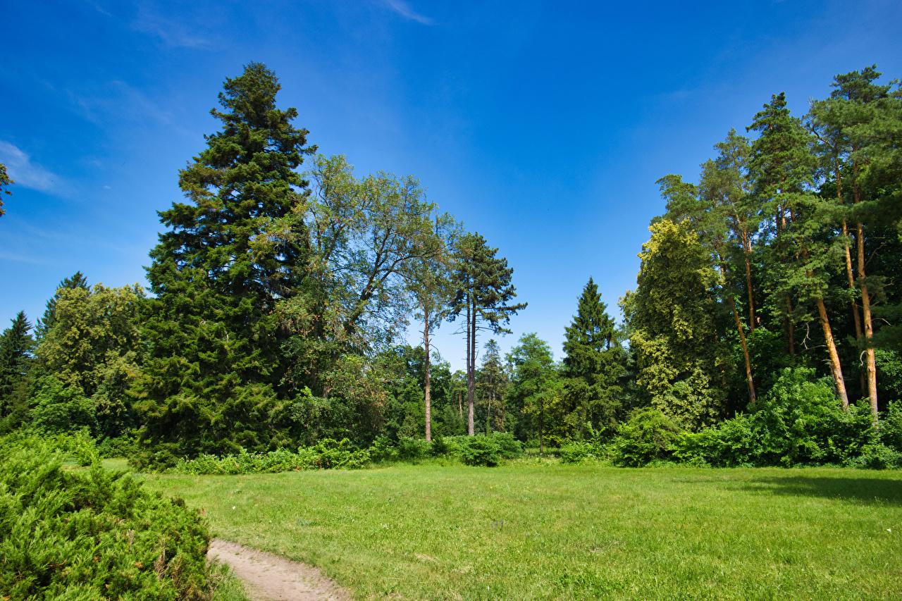 壁紙 ウクライナ 公園 Arboretum Trostyanets 木 草 低木 自然