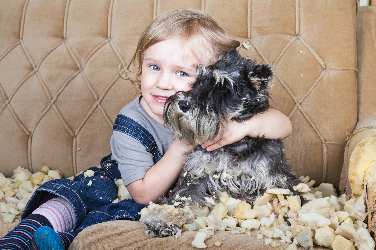 Image Schnauzer Little girls dog child hugging Glance Animals Dogs Children Hug hugs embrace animal Staring