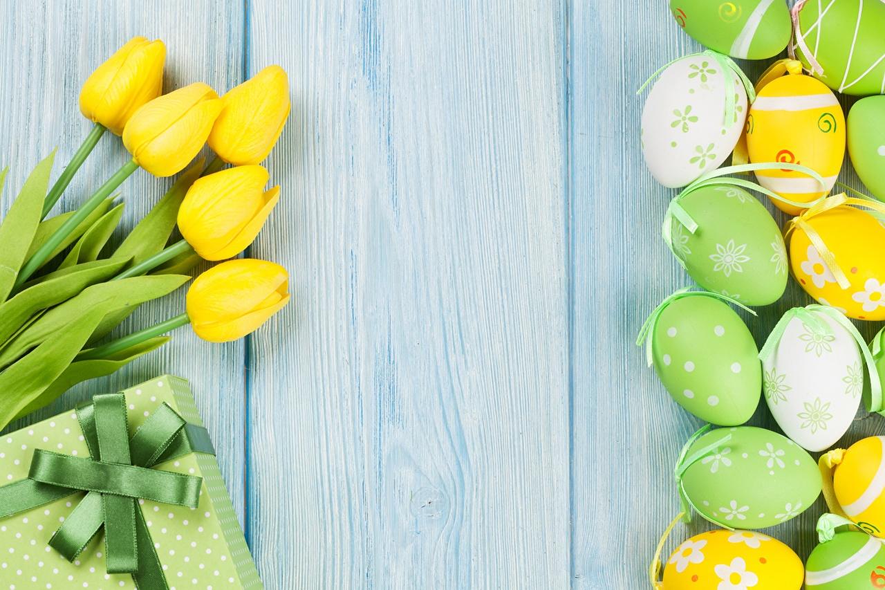 Bilder Ostern Ei Tulpen Blüte Vorlage Grußkarte Bretter eier Blumen
