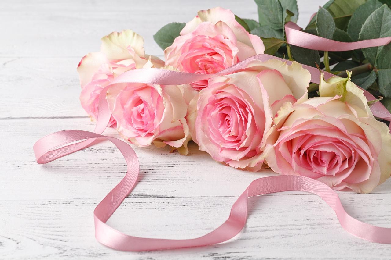 Foto Blumensträuße Rosen Rosa Farbe Blüte Band Sträuße Rose Blumen