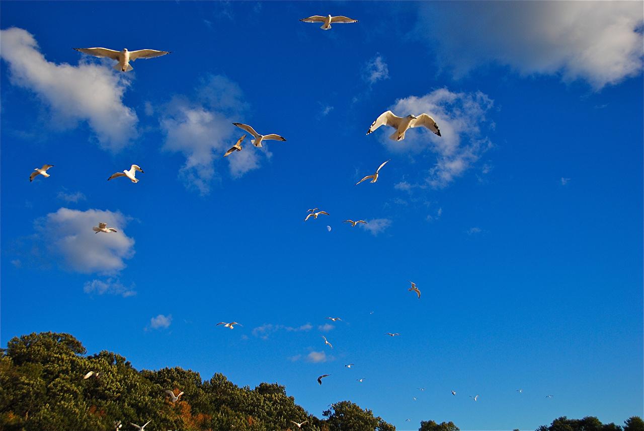 Wallpaper bird seagulls Sky Flight Animals Gull Birds animal