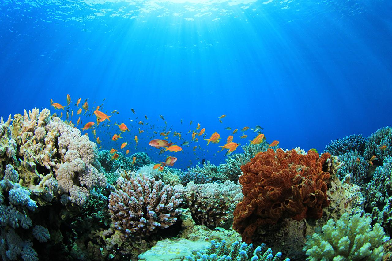 Fondos De Pantalla Mundo Submarino Corales Peces Animalia