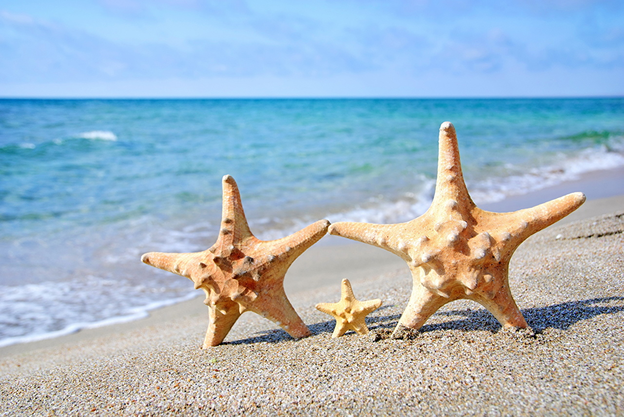 Wallpaper sea stars Beach Sea Sand Closeup Starfish beaches