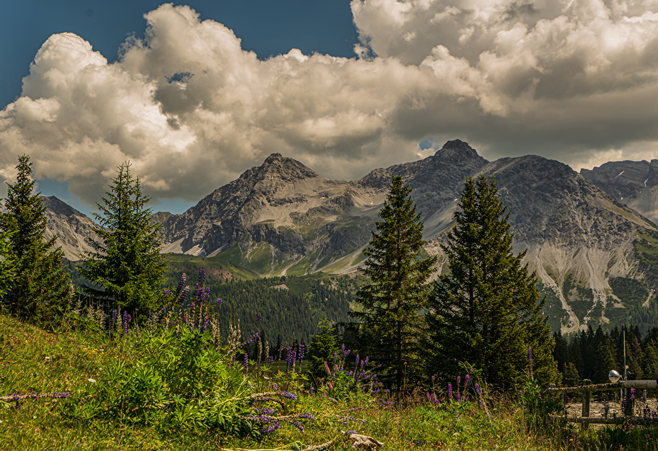 Desktop Wallpapers Alps Switzerland Arosa, Grisons Nature Spruce mountain Lupinus landscape photography Clouds Mountains Scenery