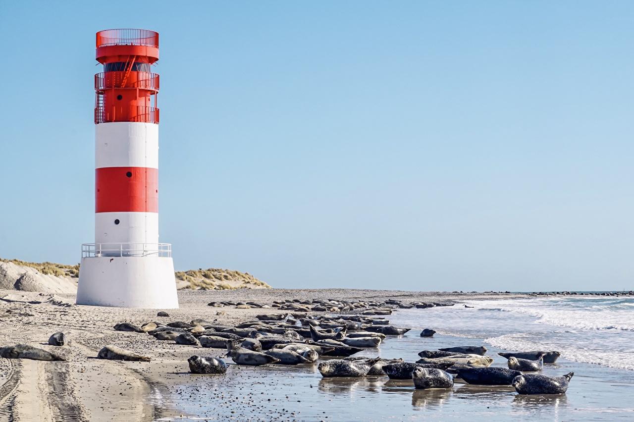 壁紙 ドイツ 島 灯台 海岸 アザラシ 海 North Sea Helgoland