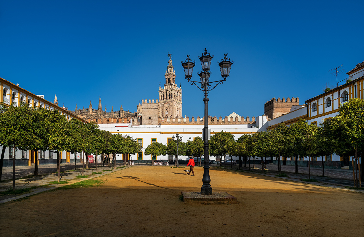 Picture Spain Barrio de Santa Cruz, Sevilla Street lights Trees Houses Cities Building