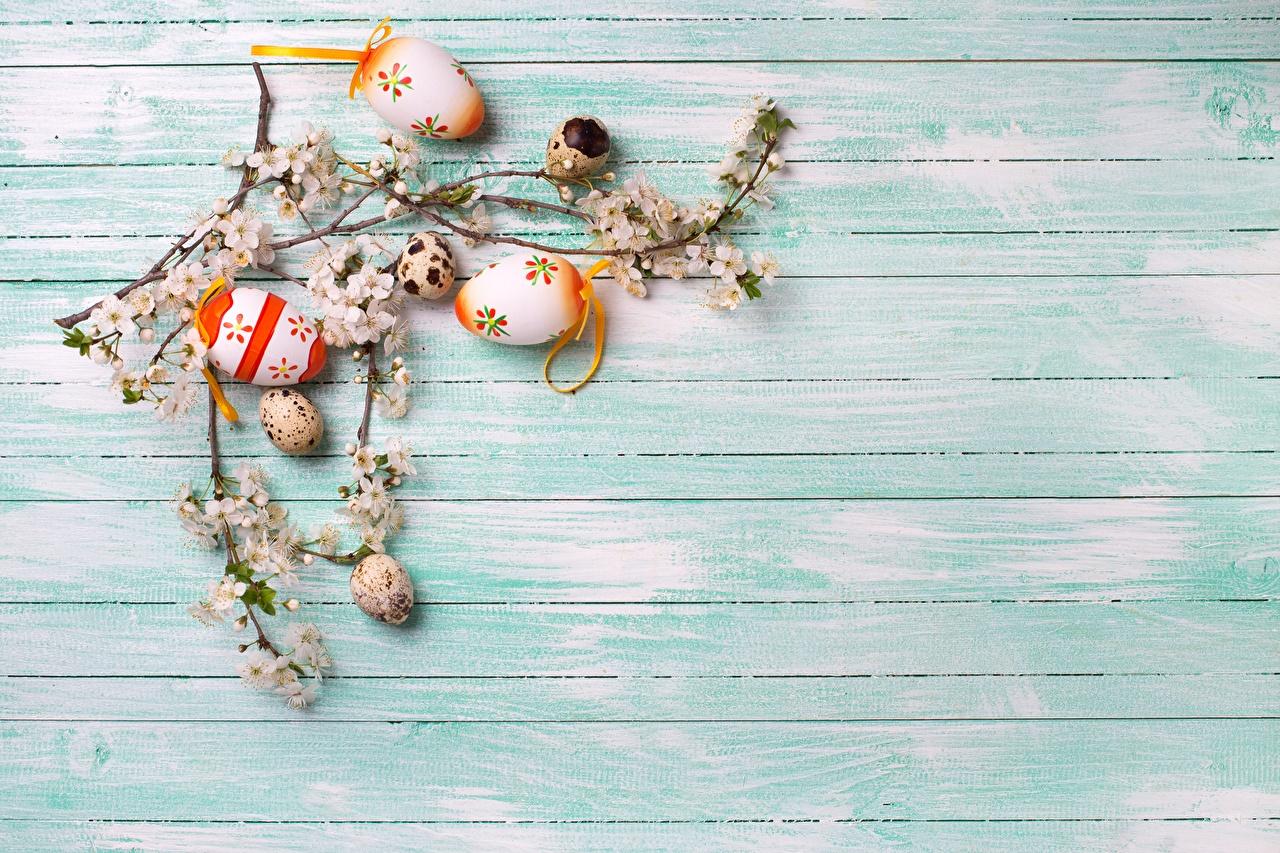 Desktop Hintergrundbilder Ostern eier Ast Vorlage Grußkarte Ei