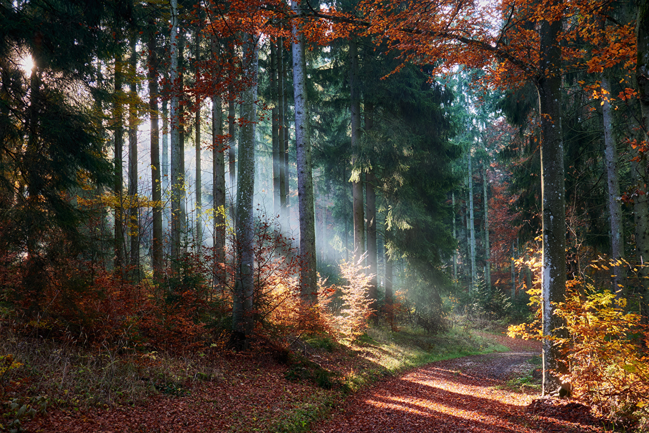 Desktop Wallpapers Rays of light Leaf path Autumn Nature Forests Trees Foliage Trail forest