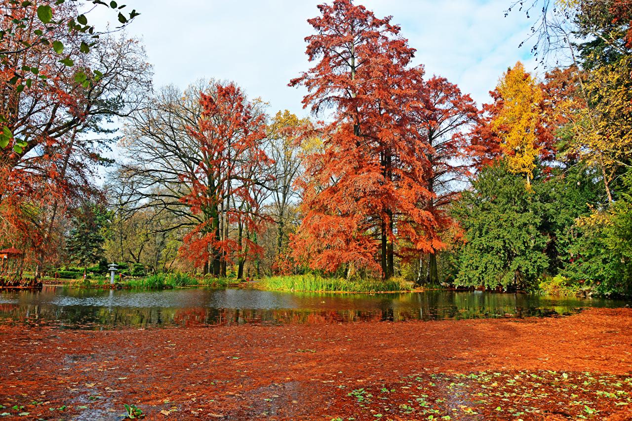 Foto Ungarn Blattwerk Botanical garden Szeged Natur Natur Herbst Teich Parks Bäume Blatt Park