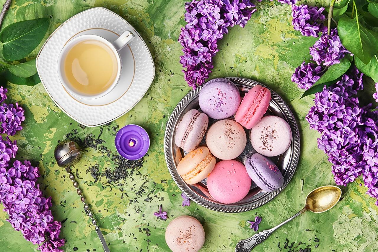 Foto Macaron Tee Syringa Tasse Löffel das Essen macarons Flieder Lebensmittel
