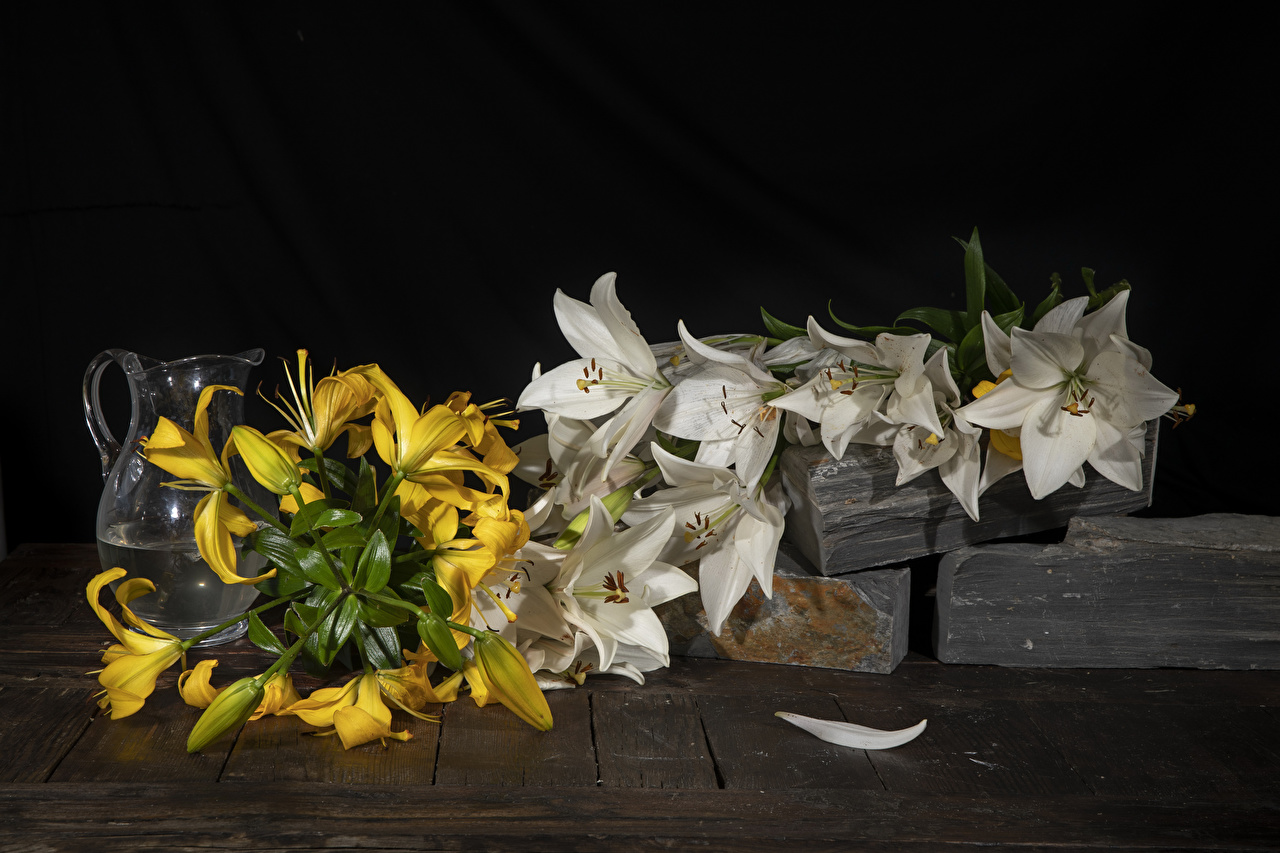 Pictures lilium Flowers Jug container Lilies jugs flower pitcher