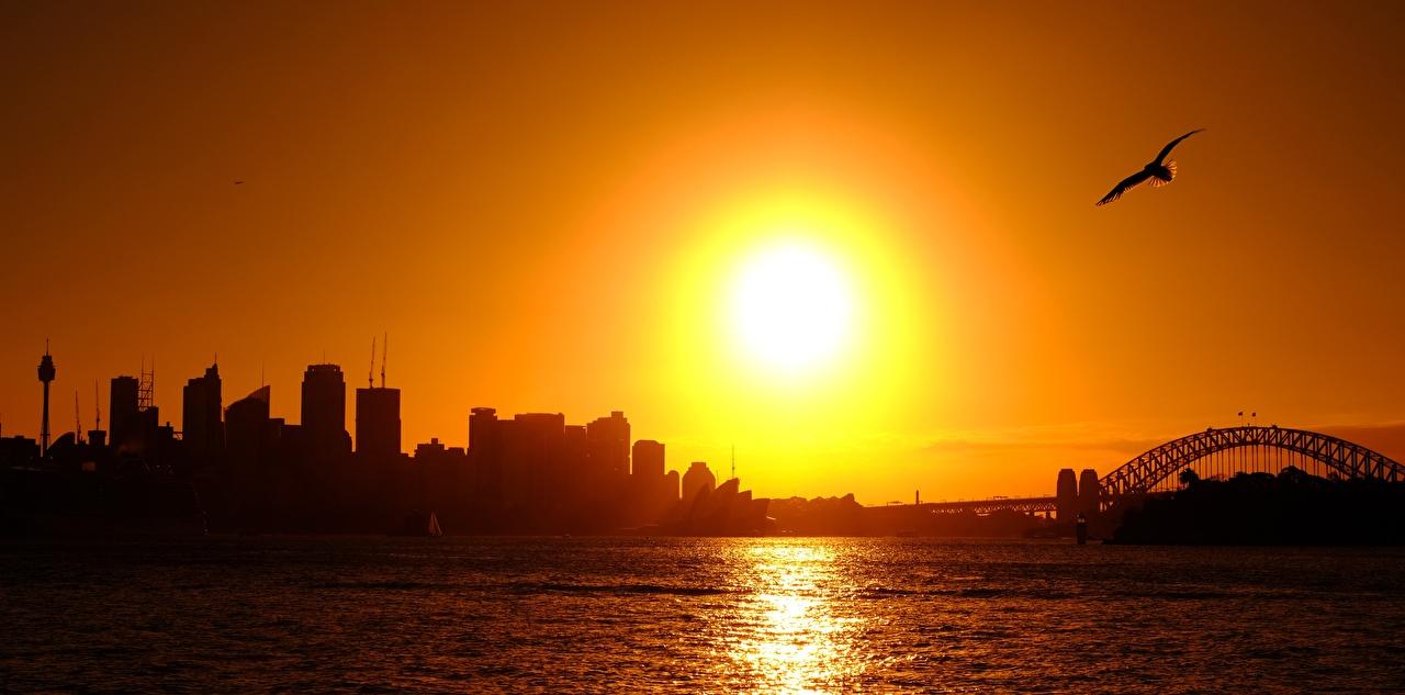 Image Sydney Gull Birds Australia silhouettes Sun sunrise and sunset Cities bird seagulls Silhouette Sunrises and sunsets