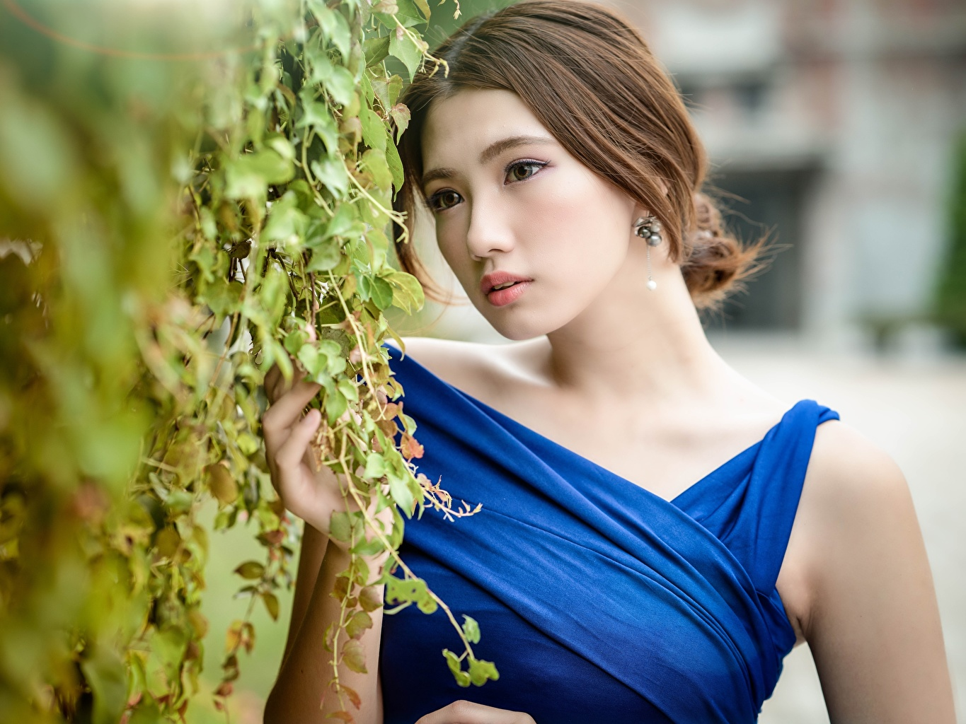 Image Brown haired Bokeh Girls Asiatic Bush Staring blurred background female young woman Asian Glance Shrubs