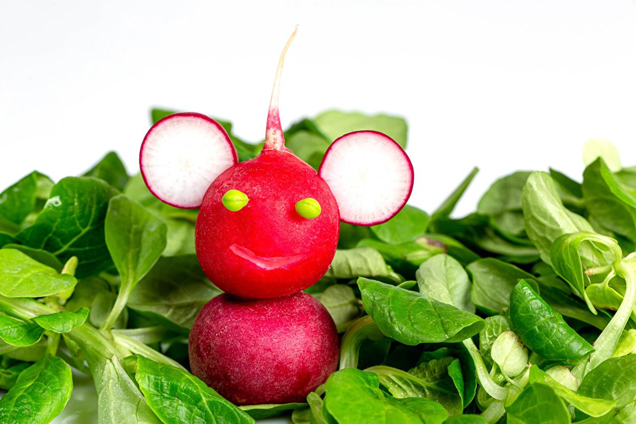 Desktop Hintergrundbilder Radieschen Kreativ Gemüse Lebensmittel Weißer hintergrund kreative originelle das Essen