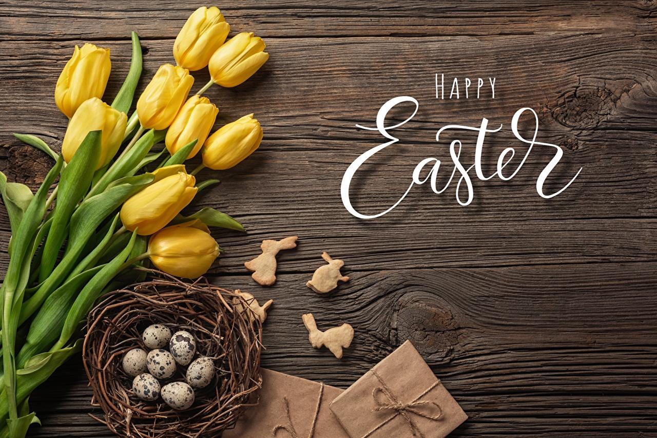 Photo Easter English Eggs Nest Tulips flower Word - Lettering egg tulip text Flowers lettering