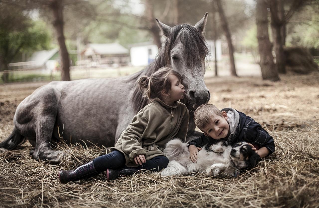 fotos von kleine mädchen junge pferde kinder tiere