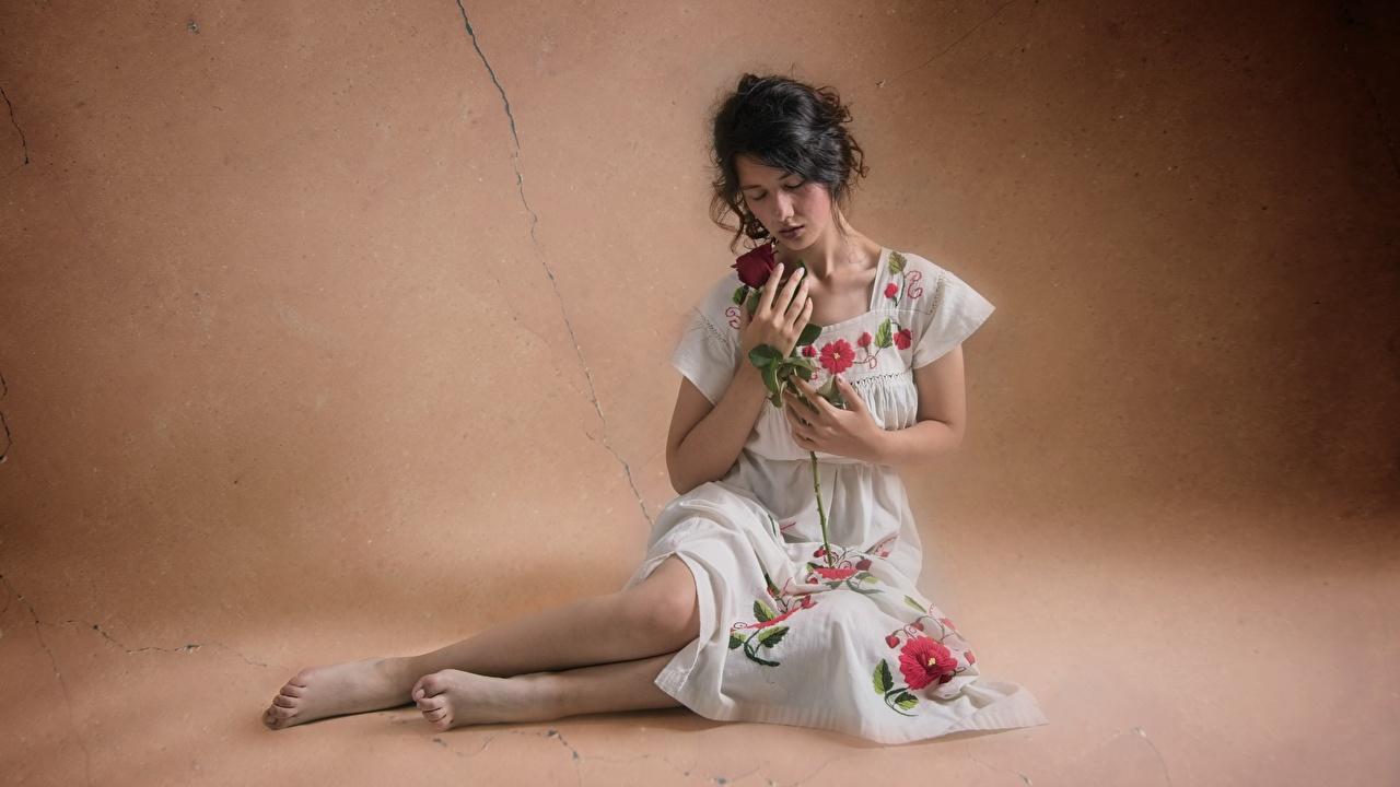 Fotos von Rosen Mädchens Bein Mauer sitzen Kleid Rose junge frau junge Frauen wand sitzt wände Sitzend