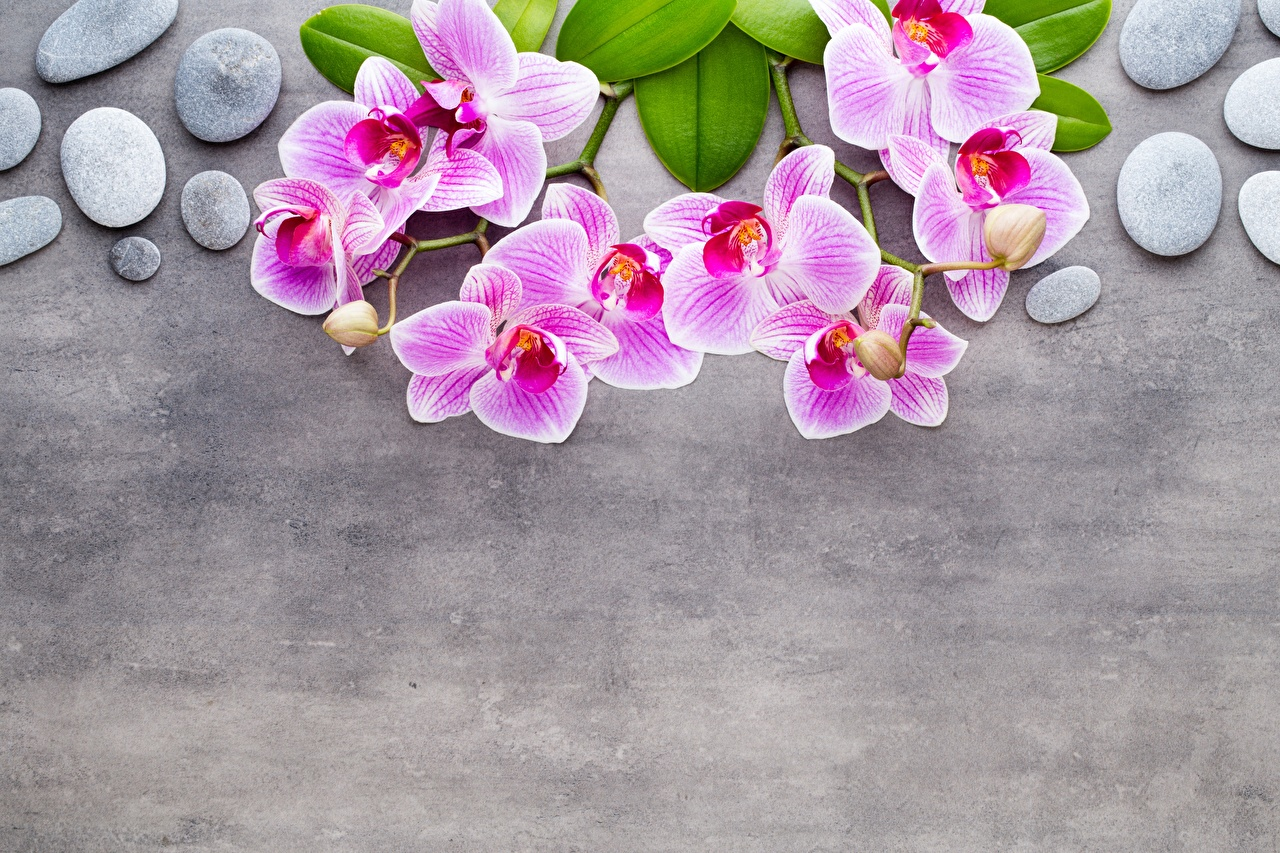 Images Orchid Pink color flower stone Branches Template greeting card Gray background orchids Flowers Stones