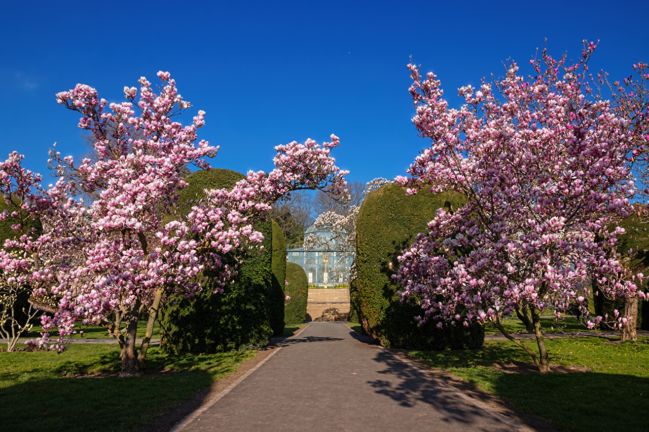 Bilder Deutschland Stuttgart Magnolia garden Natur Frühling Garten Strauch Blühende Bäume