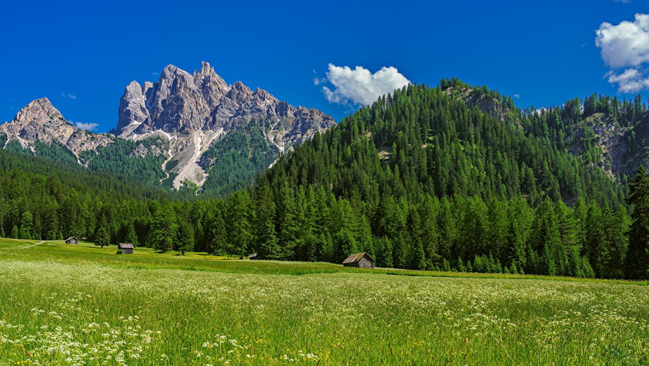 Fotos von Alpen Italien Trentino-Alto Adige Berg Natur Grünland Bäume Gebirge
