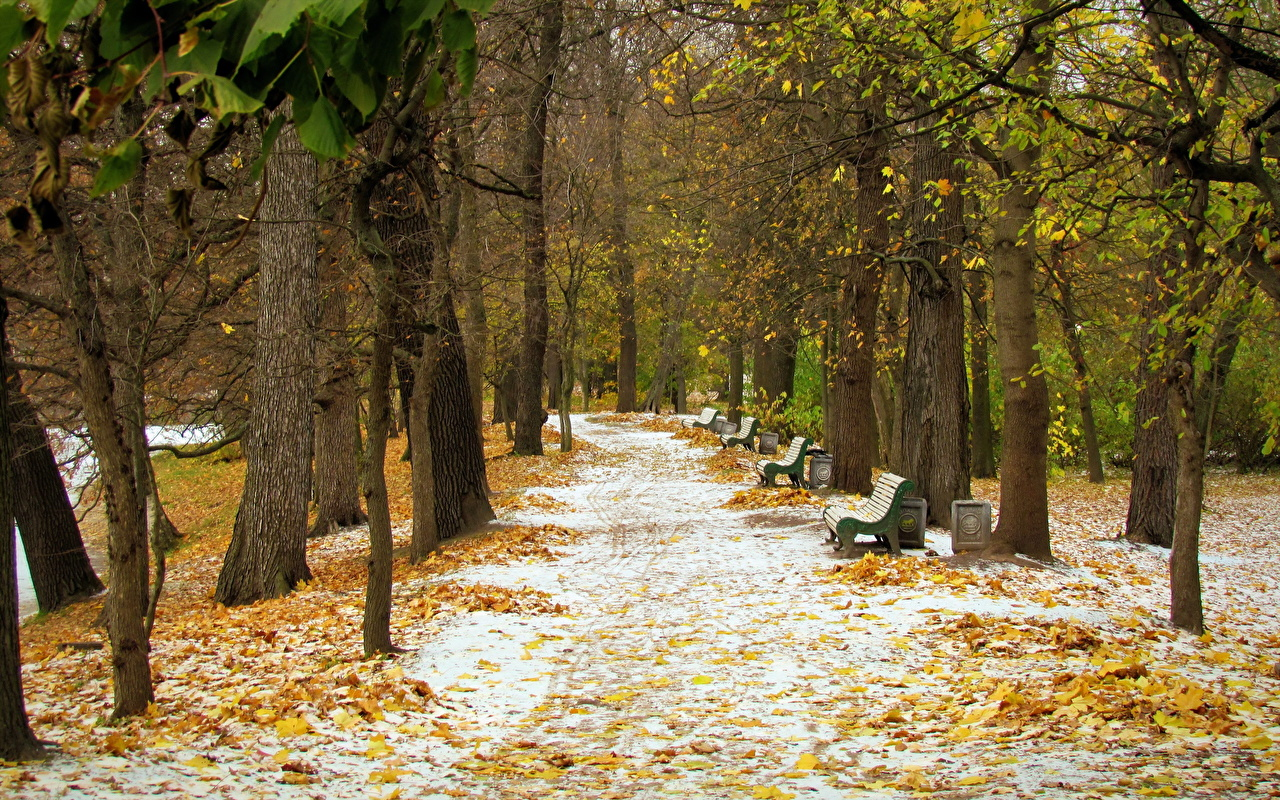 Parc Allée Arbres Neige parcs Nature