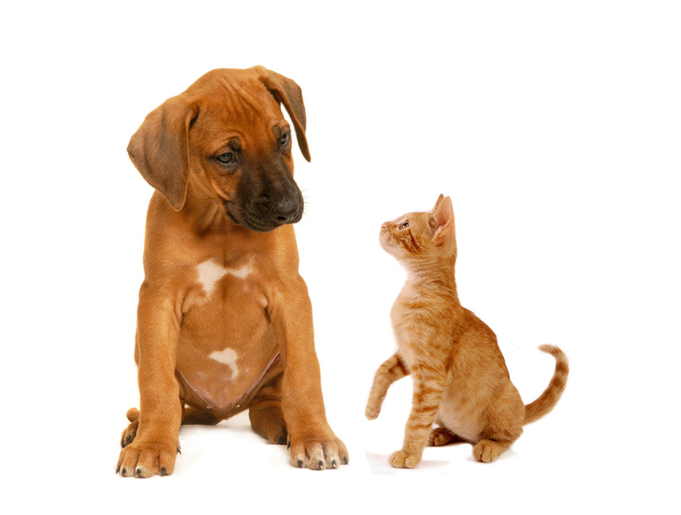 Pictures dog Cats 2 Ginger color Animals cat Dogs Two red orange animal